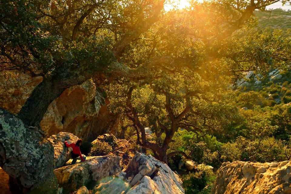 Abendsonne dringt durchs Gestrüpp / Duna de Bolonia/Andalusien
