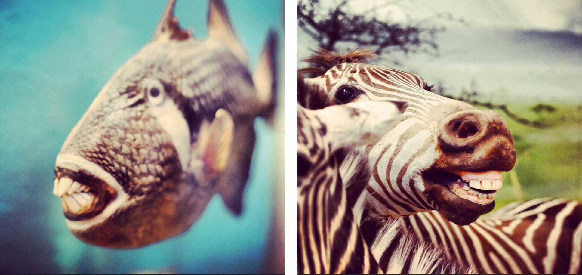 20140105_diary024_fisch_zebra