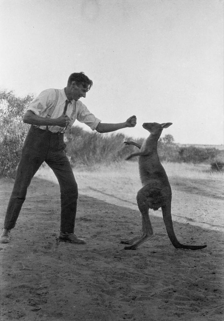 Bill Boyd boxt mit seinem Hauskänguru, Kanga Joe (Wikimedia Commons)