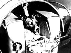 Laika in ihrer Kapsel (BBC)