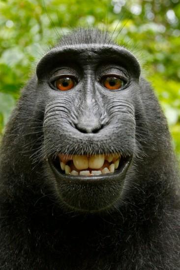 © niemand, nicht mal der Affe