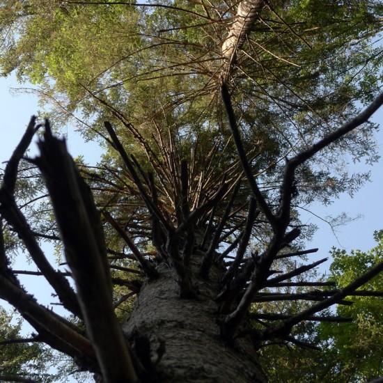 Waldbewuchs und tote Äste