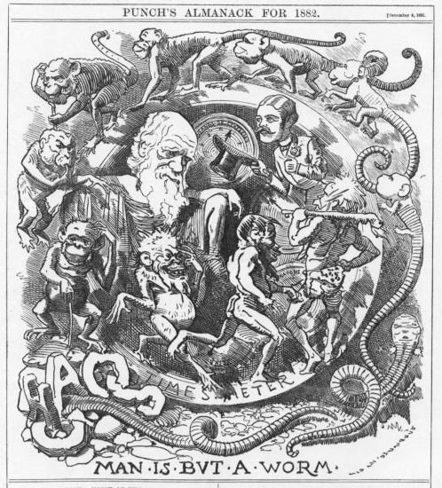 Regenwürmer als Ausgangspunkt und Darwin als Endpunkt der Evolution (Linley Sambourne / 1881 / wikimedia commons)