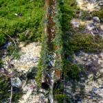 Brunnenzufluss mit Moos ueberwachsen