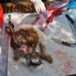 Hase mit über die Ohren gezogenes Fell / gehäutet
