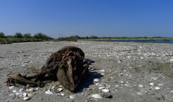 Totes, unbestimmbares Tier am Strand in Rumänien