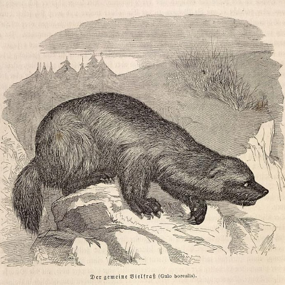 Wolverine der Scheißkerl