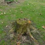 Bewachsener Baumstumpf im Grazer Stadtpark