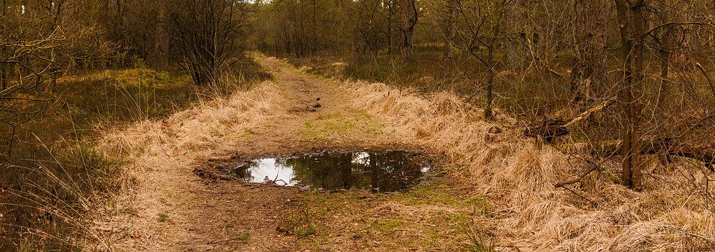 Wasserlacke bzw. Pfütze bzw. Lache (Dominicus Johannes Bergsma / wikimedia commons)