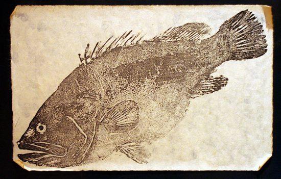 Gyotaku - Abgepauster Fisch (DigiPub/J.G. Wang / wikimedia commons)