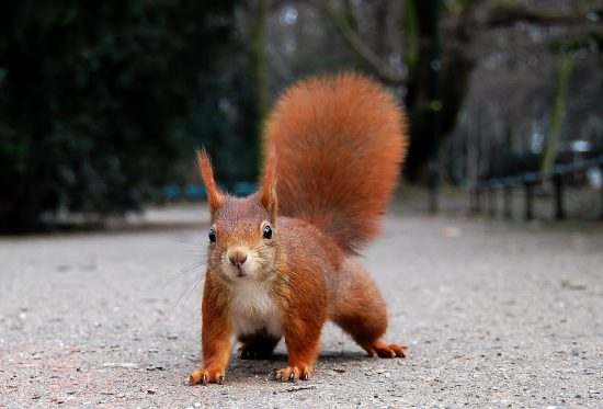 Oachkatzl, die vermeintlich gefährlichsten Cyberterroristen (Ray eye / wikimedia commons)