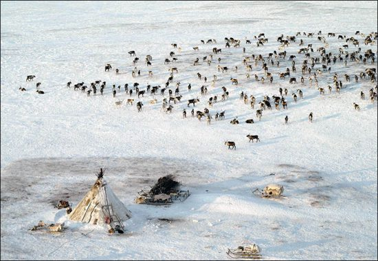 © Alexander Tyryshkin, Yamal Governor's press service (via siberiantimes.com)