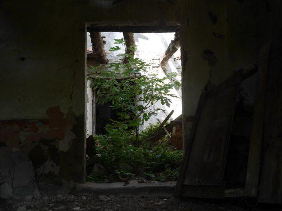 Feigenbaum im Haus