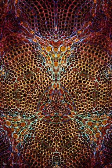 "Zieralgen-""Mandala"" (Igor Siwanowicz / via thisiscolossal.com)"