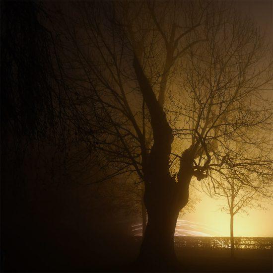 Silhoutte eines Baumes am Grazer Schloßberg