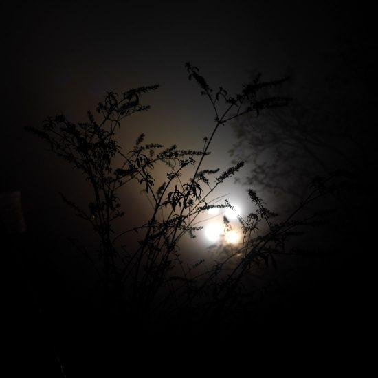 Pflanzen vor Licht am Grazer Schloßberg