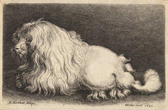 Ein weißer Pudel, von gleicher Rasse und Zeit als Boye (17. Jh. / wikimedia commons)