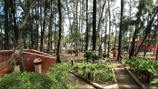 Koniferenhain im Mamalla Beach Resort  (https://www.tripadvisor.com.sg/ReviewPhotos-g1162480-d477867-r88260036-Mamalla_Beach_Resort-Mahabalipuram_Tamil_Nadu.html#28861110)