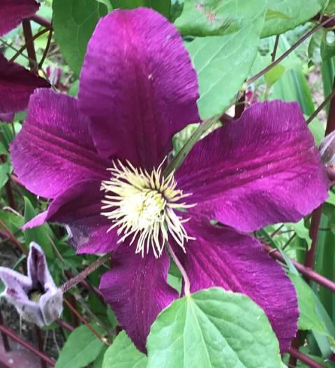 Blumen Tentakel
