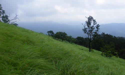 Wolli im Wunderland. Tagebuch einer Indienreise #12